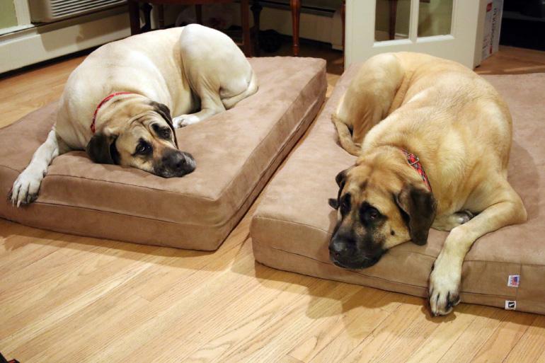 Собака на лежанке