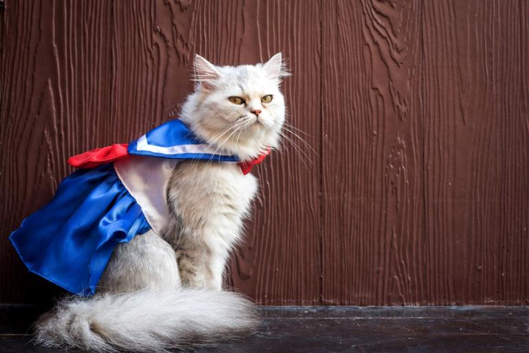Кот в оригинальном костюме