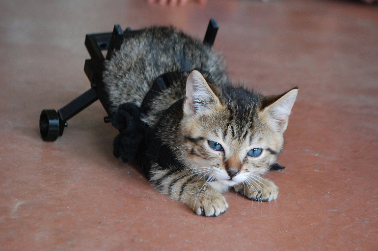 Котёнок инвалид