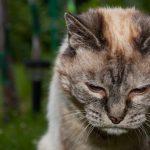 Самые старые кошки и коты в мире