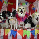 Как дрессируют собак в цирке?