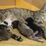 Оптимальный возраст котёнка для отлучения от мамы, почему нельзя забирать малыша раньше