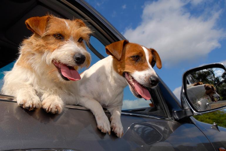 Собаки путешествуют
