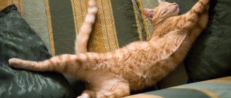 Кот спит на диване