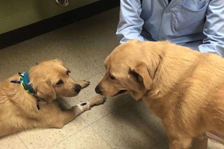 Доноры собаки