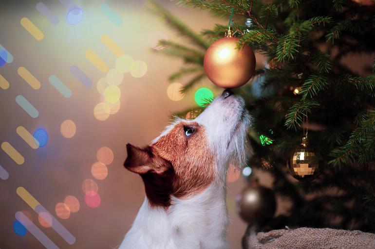 Пёс и ёлочные игрушки