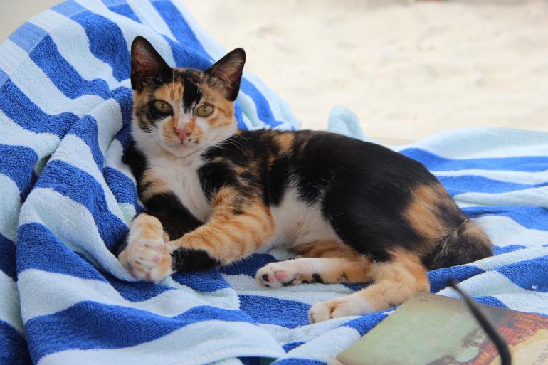 Кошка на пледе