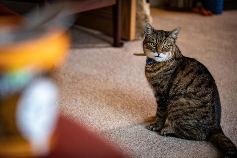 Кошка сидит на полу