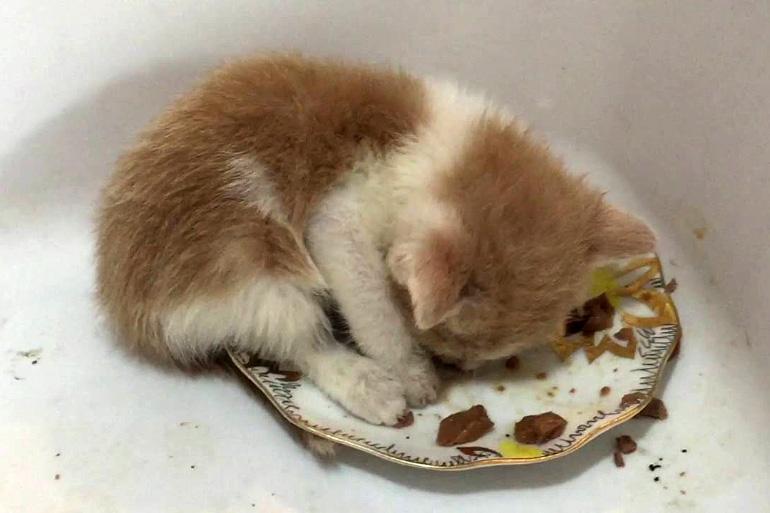 Котёнок уснул в миске