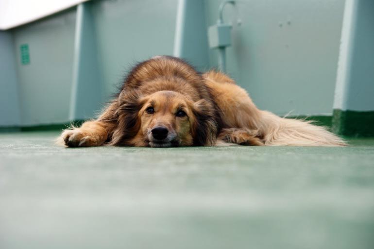 Собака на палубе