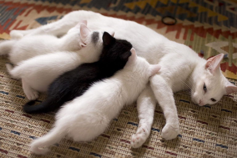 Котята и мама