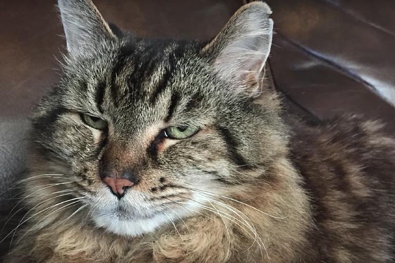 Кот старичок