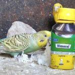 Витамины и минералы, необходимые для волнистых попугаев