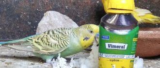 Витамины для попугаев