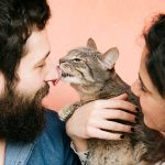 Отношение к кошкам в разных странах мира