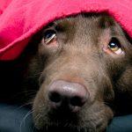 Что делать, если собака боится грозы