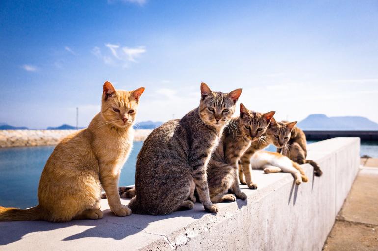 Кошки в греции
