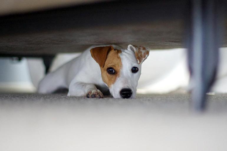 Пёс спрятался под кроватью