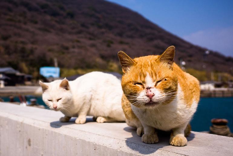 Кошки в Италии
