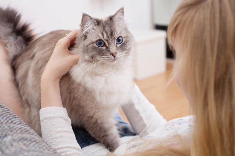 Ухоженная кошка