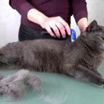 Фурминатор для кошки: выбор и использование