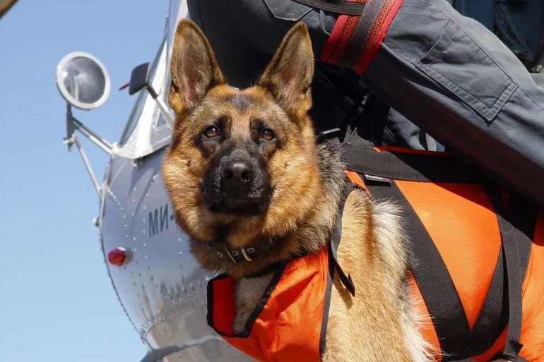 Собака на службе в МЧС