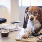 Необычные профессии собак