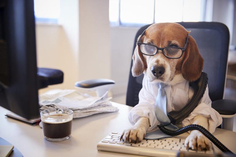 Собака на работе