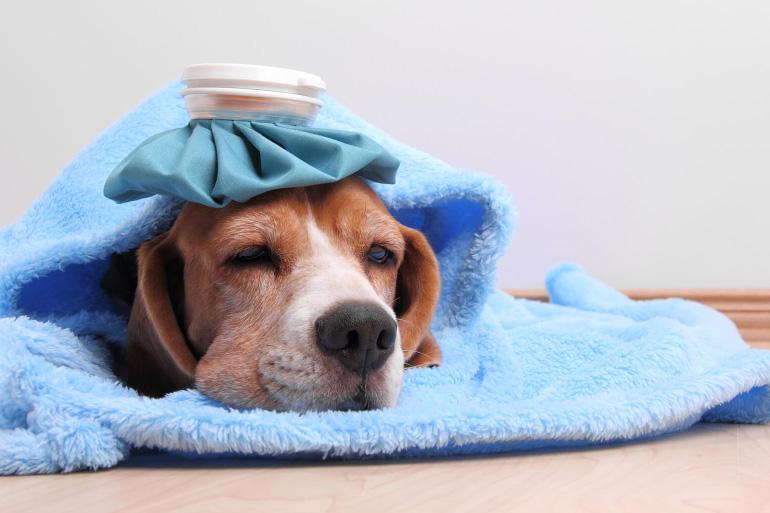 Собака простудилась