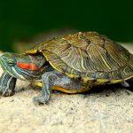 Как выбрать морскую черепаху для дома