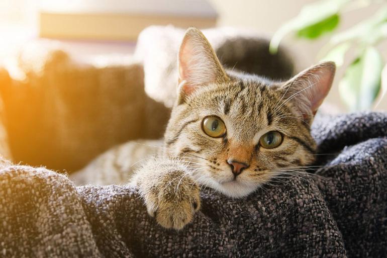 Усики у кошки