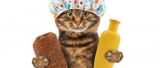 Кошка собралась мыться