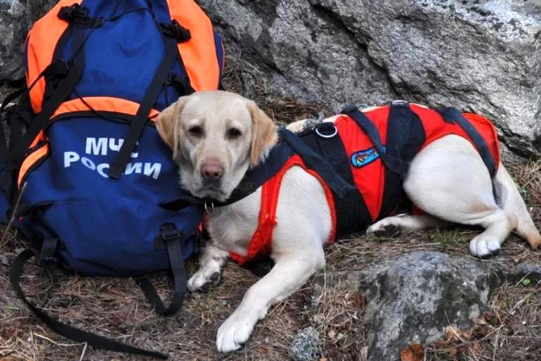 Собака спасатель
