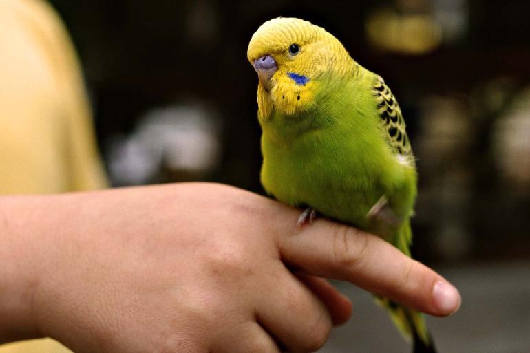 Попугай на пальце