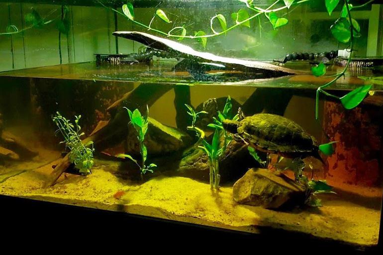 Акватеррариум для черепах