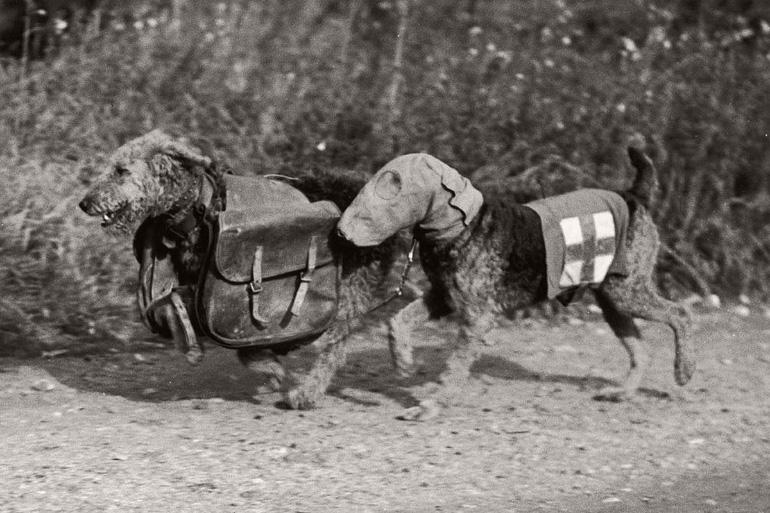 Собаки санитары