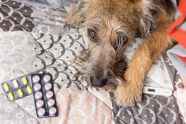 Собака с таблетками