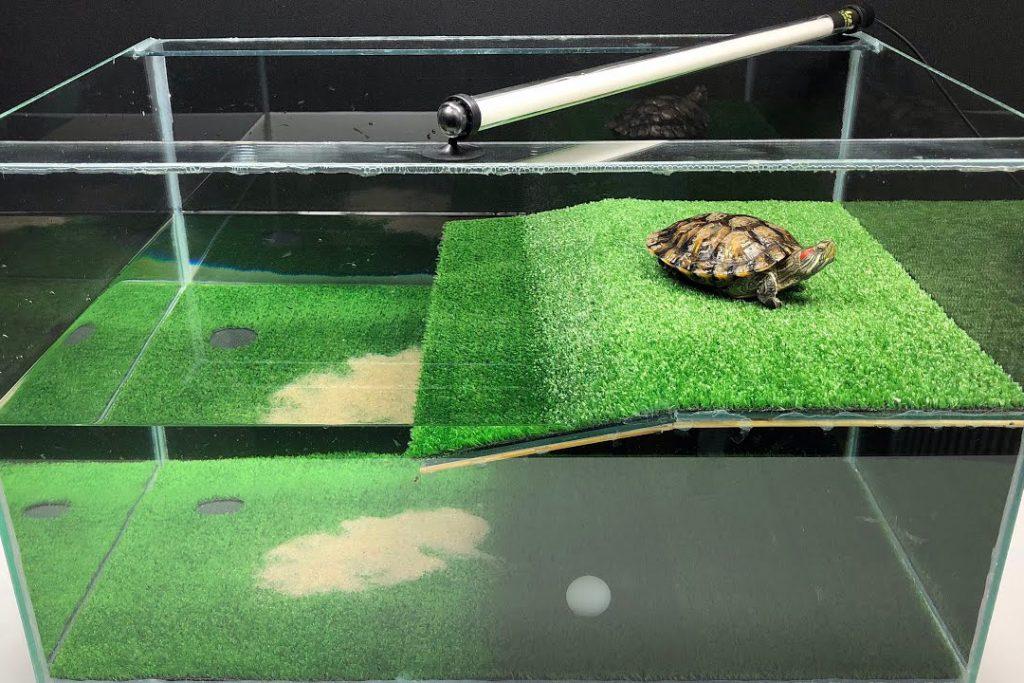 Аквариум с черепахой